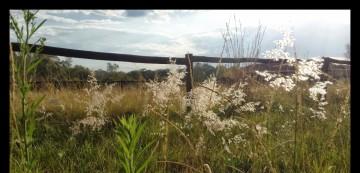 cropped-grasses.jpg