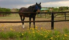 Donnybrook horses 042