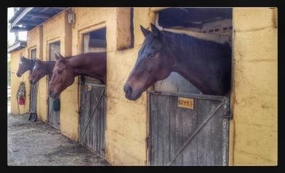 Horses in stableyard