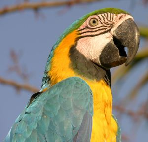 Montecasino Birdgarden 045